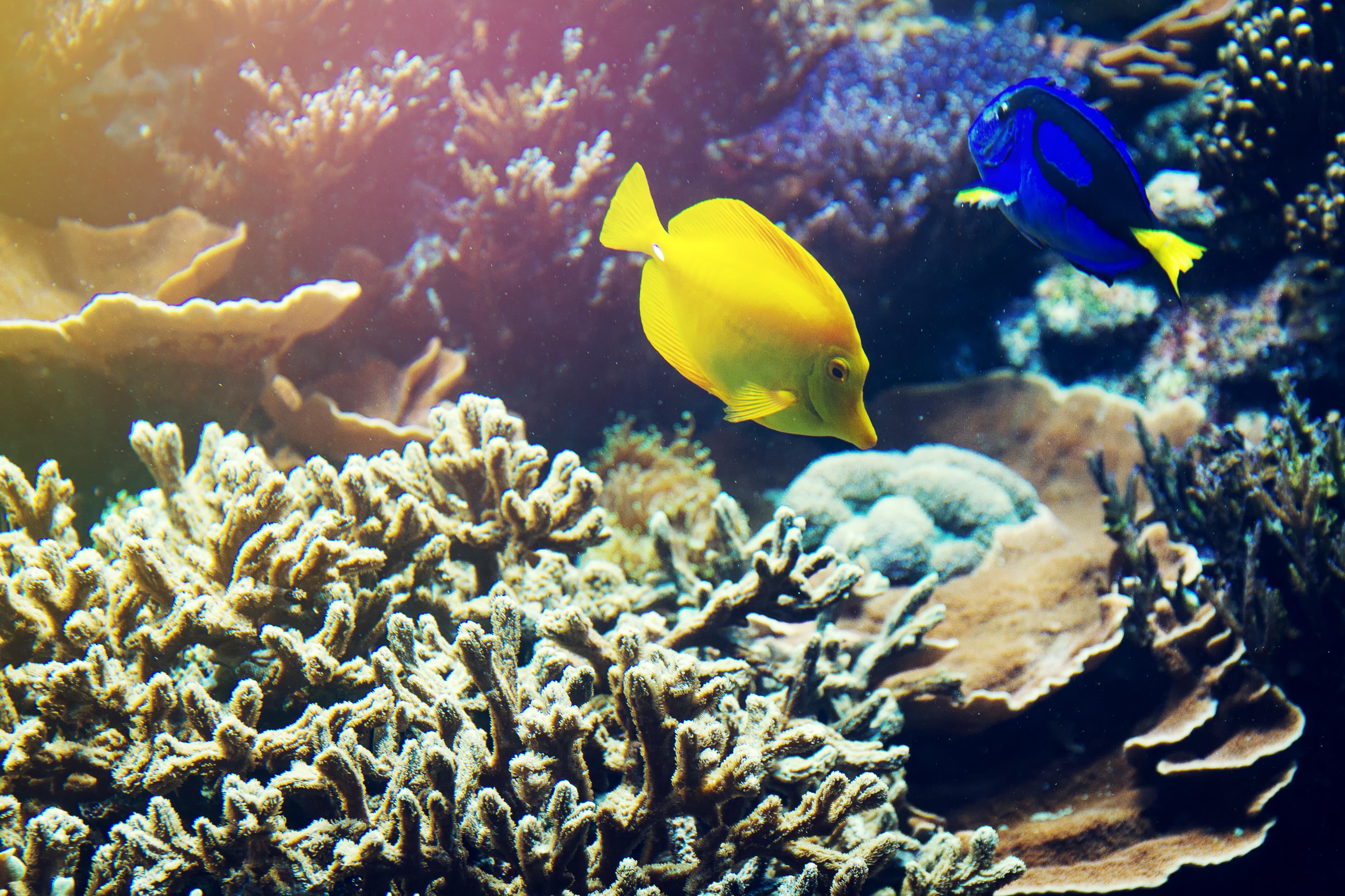 Die bunte Unterwasserwelt Aquarella