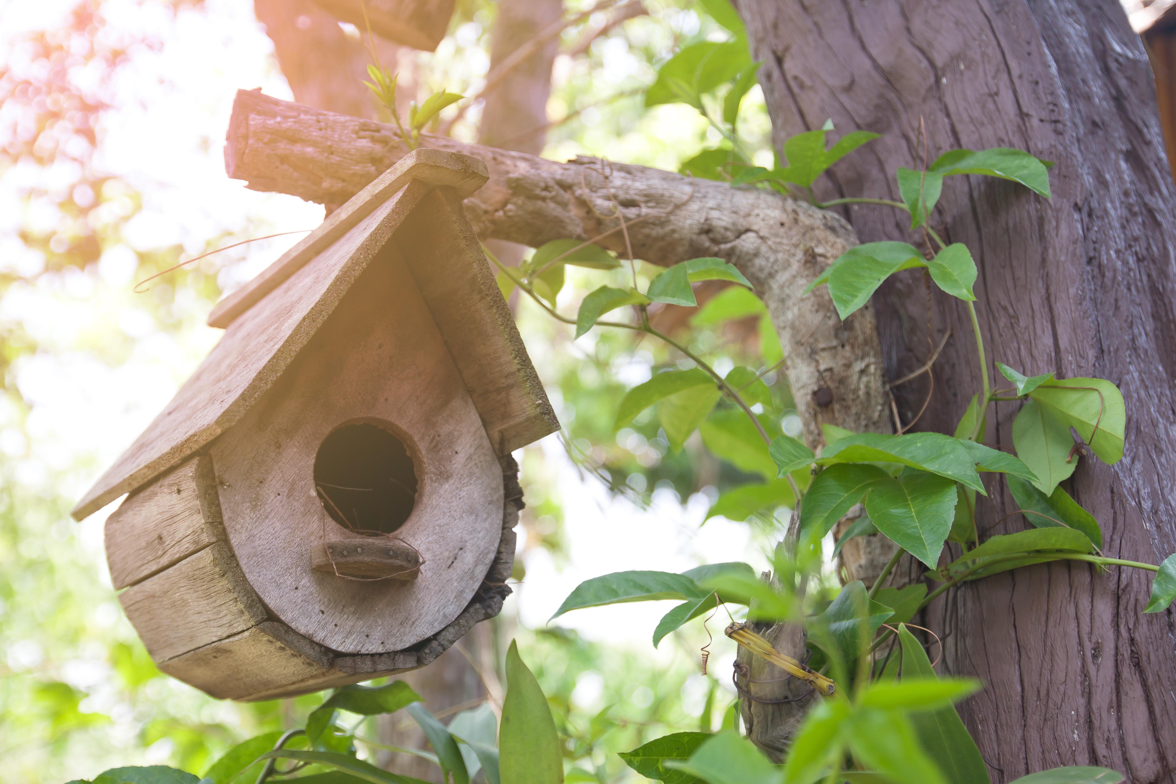 Das Vogelhäuschen