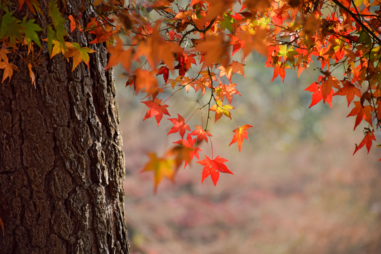 Herbstliches